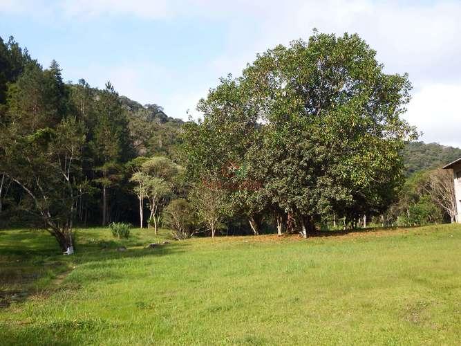 Árvores e pinheiros