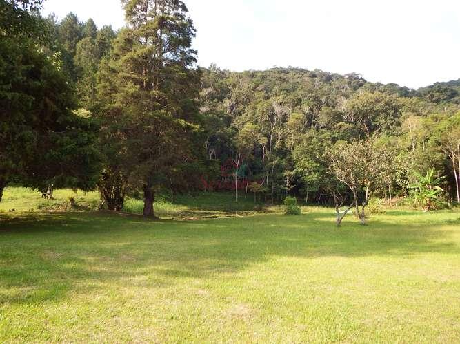 Bosque todo gramado