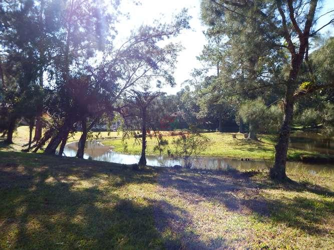 Bosque gramado
