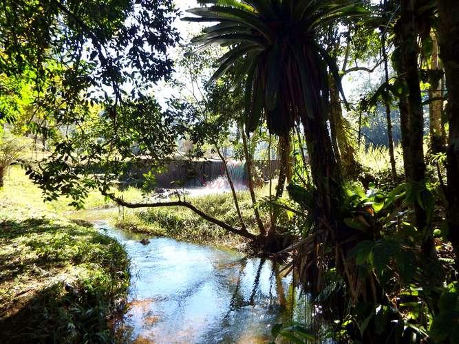 Vista do bosque para queda d' água