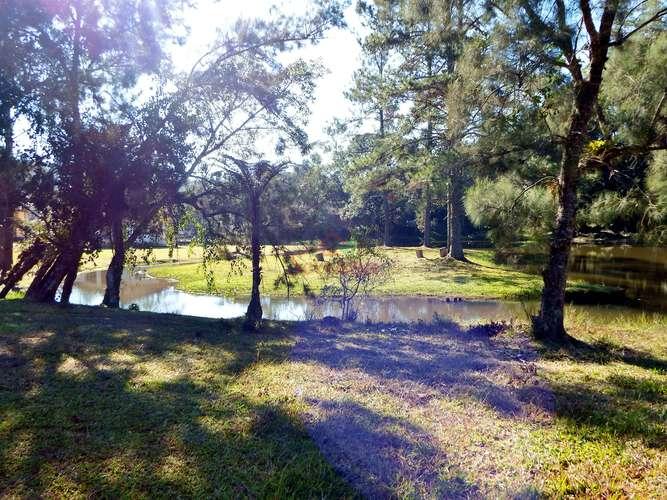 Vista do bosque para riacho