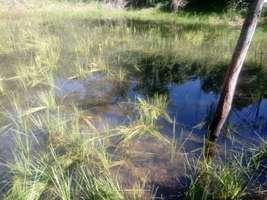 Terreno 24 hectares com água corrente em Jequitibá mg.